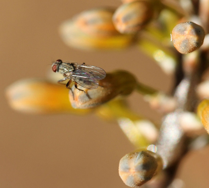 3-0827978-Tala Fly