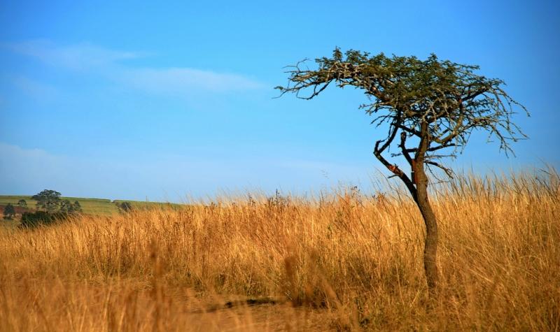 5-0824659-Tree