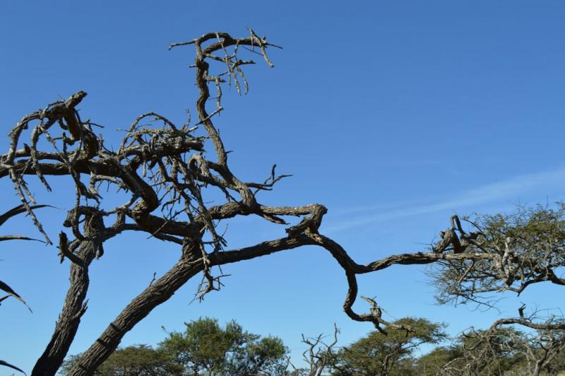 5-0827479-Dead Tree