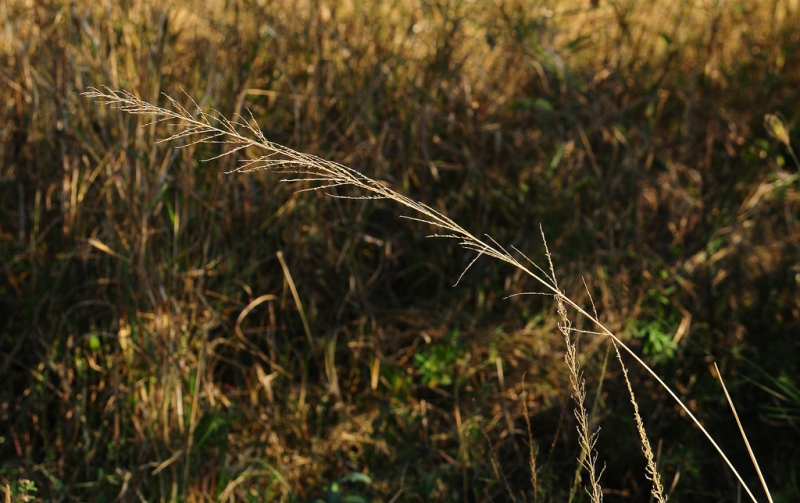 7-0824660-Grass