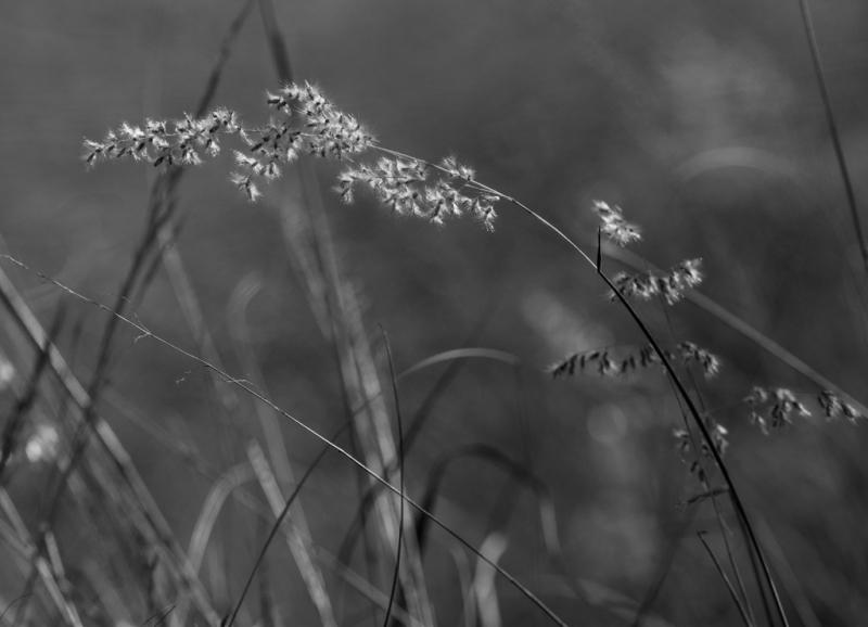 7-0827425-Grass