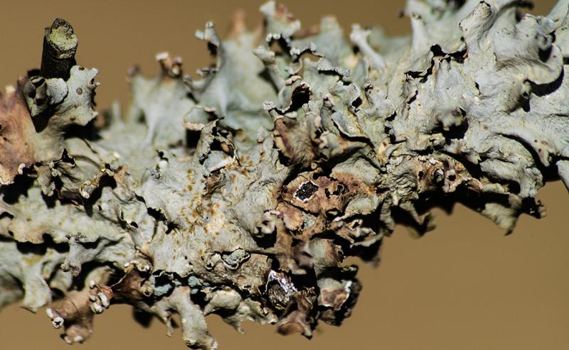 9-0828053-fungi
