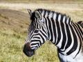 1-0828160-Stripes