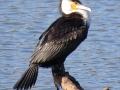 2-0828655-BIRD