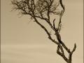 5-0824699-Old tree
