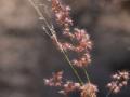 7-0828445-pink fluff