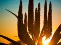 8-0824565-Floral sunrise