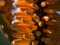 8-0827459-Flowering Aloe