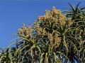 8-0828347-Succulent