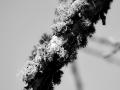 9-0828455-Back and white fungi