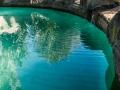 B-0827461-Cool Pool